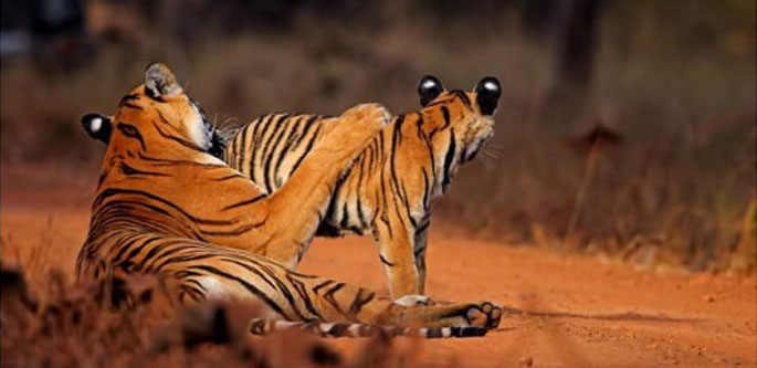 BEAUTY OF RAJASTHAN WITH WILDLIFE (14 NIGHTS 15 DAYS)