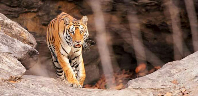 GOLDEN TRIANGLE WITH VARANASI AND RANTHAMBHORE SAFARI (08 NIGHTS 09 DAYS)