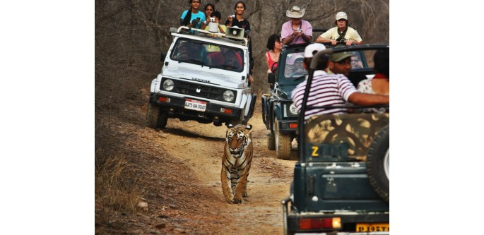 Golden-Triangle-Tour-with-Indian-Wildlife-Safari-Tour-Package