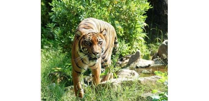 Golden-Triangle-Tour-with-Jim Corbett-Bandhavgarh-Kanha
