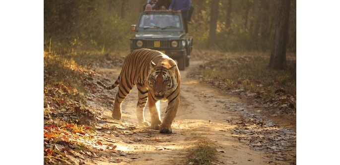 golden-triangle-tour-with-ranthambore
